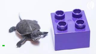 Oregon Zoo welcomes 15 tiny turtles