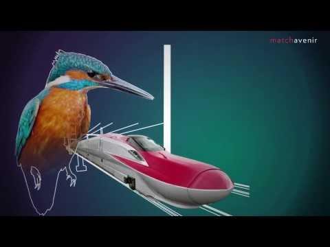 Le biomimetisme en action