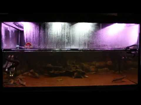 1400L Prehistoric Predator Aquarium (Fire Eel, Lungfish, Gar, Bichirs & Arowana)