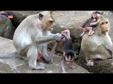 Sasha Young Mother Monkey And Jessie Baby Monkey Dating With Tourist At Bayon Temple