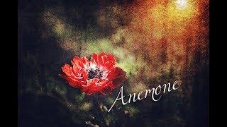 オリジナル曲投稿第三十四弾!! 今回は少しロックでセクシーな曲を目指しました!Anemoneという花にはたくさんの花言葉があり、そこから歌詞を作りました! 是非是非 ...