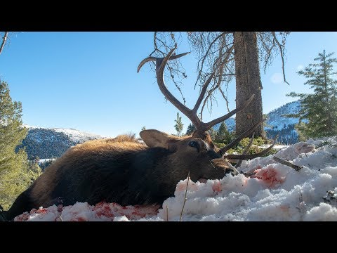 ELK HUNTING MONTANA WITH A RIFLE