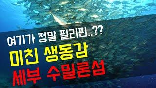 [4K] 세부 스쿠버다이빙 미친 생동감의 릴로안 수밀론섬 - 2018 Dive Ludens