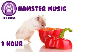 1 Hour of Music for your Hamster - Keep your Hamster calm and relaxed this winter!!