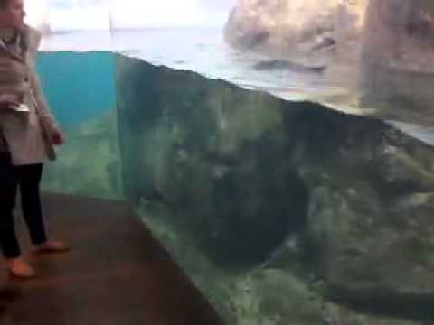 Penguins at colombia zoo