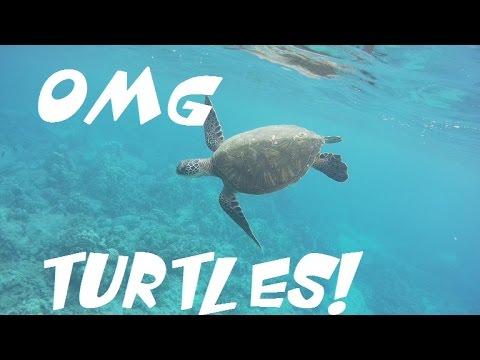 Maui Snorkeling: Turtles OMG