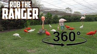 Beautiful Birds! Flamingos, Ibises, and Egrets (In 360° VR)