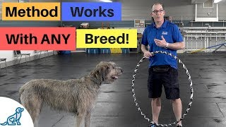 Teach Your Dog To Jump Through A Hoop - Professional Dog Training Tips