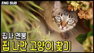 만약 고양이를 잃어버렸다면, 집나간 고양이 찾는방법