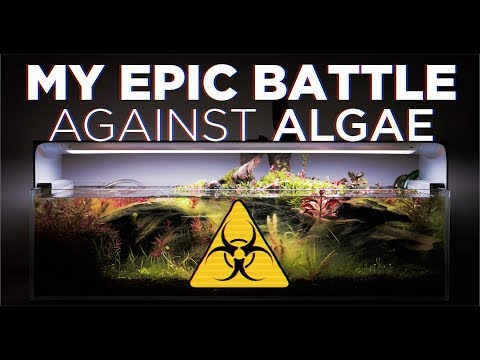 Algae Control In Aquariums - How To Destroy Algae