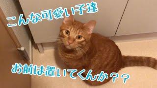 【猫 鳴き声】出かけるのを察知して鳴いて訴えるきんたさん