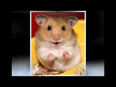 Một số hình ảnh về con chuột