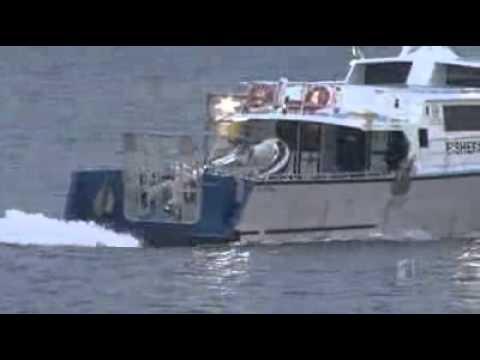 Boat captain sees sharks kill diver