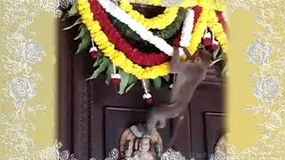 Забавные обезьянки на празднике в Индии