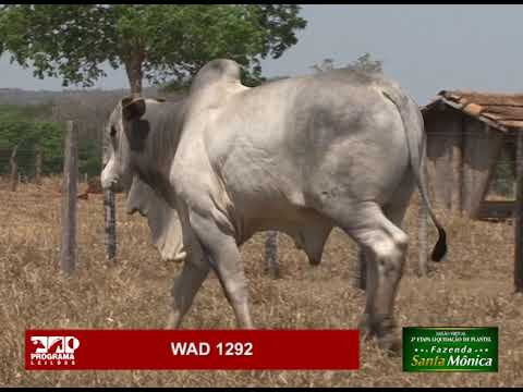 LOTE 18 - WAD 1292