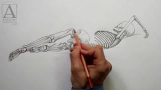 Body Anatomy - Anatomy Lesson for Artists