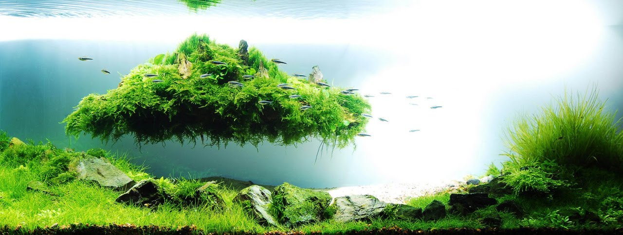 NEW Fly island aquascape design YouTube