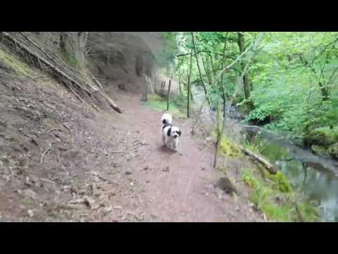 A day in the life of a dog walker