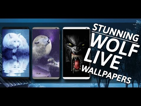 Wolf Wallpapers thumb