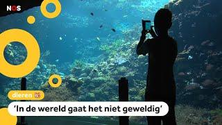 Nederlandse dierentuin kweekt tropisch koraal