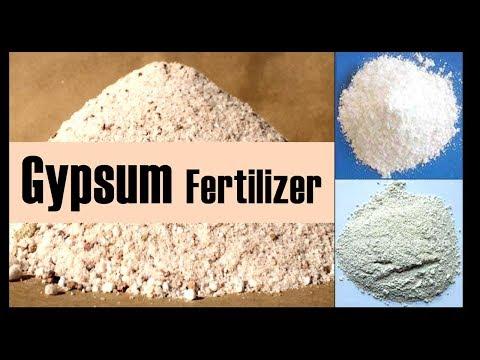 The Fertilizer Gypsum and its effectiveness