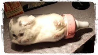 Коты это ЖИДКОСТЬ (Cats are FLUID), приколы с котами (fun with cats) #472
