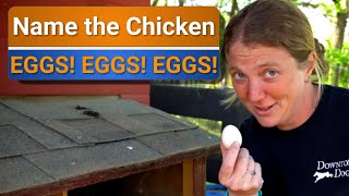 Farm to table - We have too many eggs!