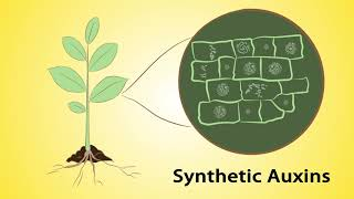 Mode of Action, Part 1: Herbicides and Insecticides (Hindi)