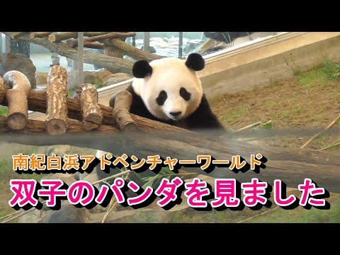 【和歌山観光3】南紀白浜アドベンチャーワールド・双子のパンダ~20190915-03~Adventure World Giant Panda