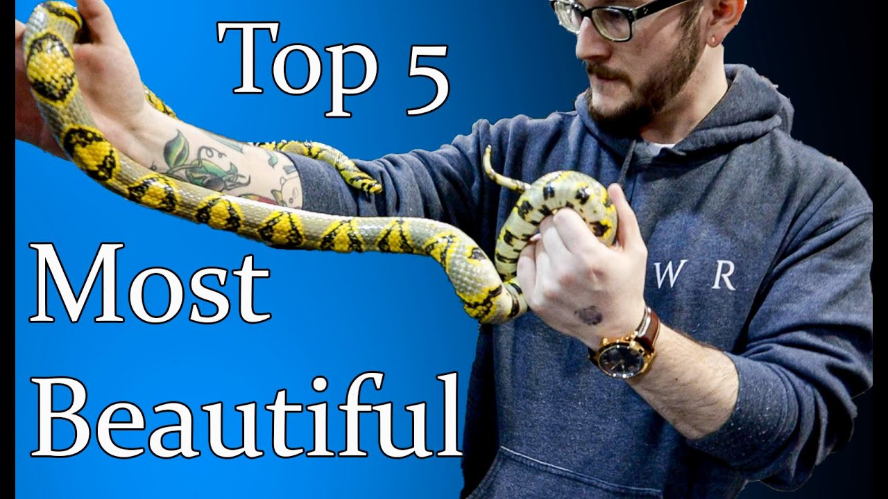 Top 5 Most Beautiful Snakes That Make Great Pets