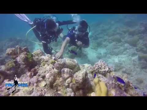 India scuba diving and no swimmer