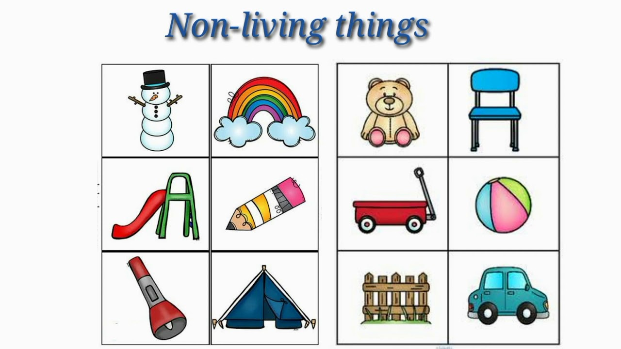 Living and Non Living Things   Grade 1 Science   Living Things and  Non-Living Things - YouTube