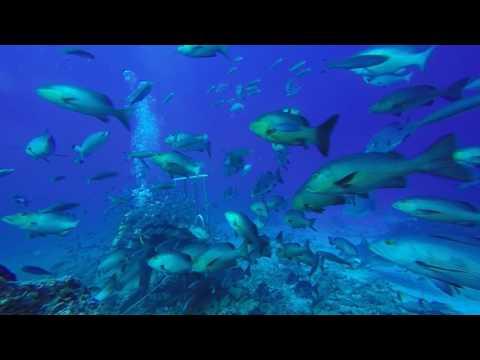 Awakening Shark Dive on Kuata Island in Fiji