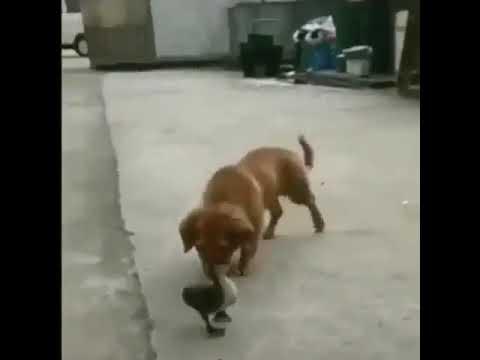 Как больно щенку
