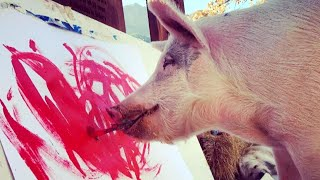Pigcasso To DogVinci: Animals Inspire With Their Art