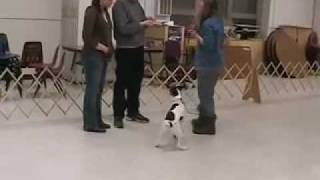 Canis Sapiens Students Practice Canine Good Citizen Test Ii