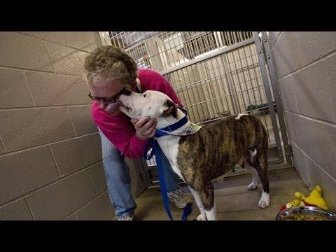 Why Calling A Dog A Pit Bull Could Extend Its Shelter Stay - Newsy
