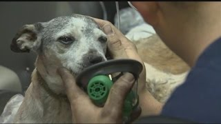 Firefighters Rescue 34 Dogs From House Fire of Hoarder