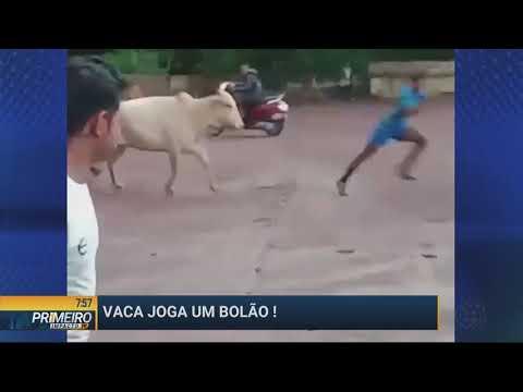 Vídeo: homens jogam futebol com uma vaca! - Primeiro Impacto PR (22/07/19)