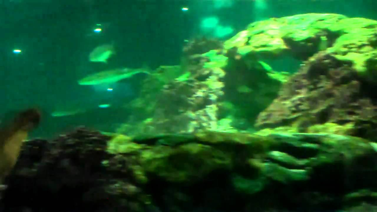 Freshwater aquarium fish orlando - Inside Walking Fish Tank At Sea World Orlando