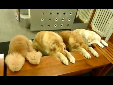 Funny Discipline Dogs Praying Before Eating Videos Compilation || NEW