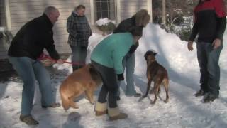 Dog Obedience Training - North Easton, Massachusetts - Dewey