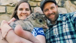 The Bird Man's Getting Turkeys!