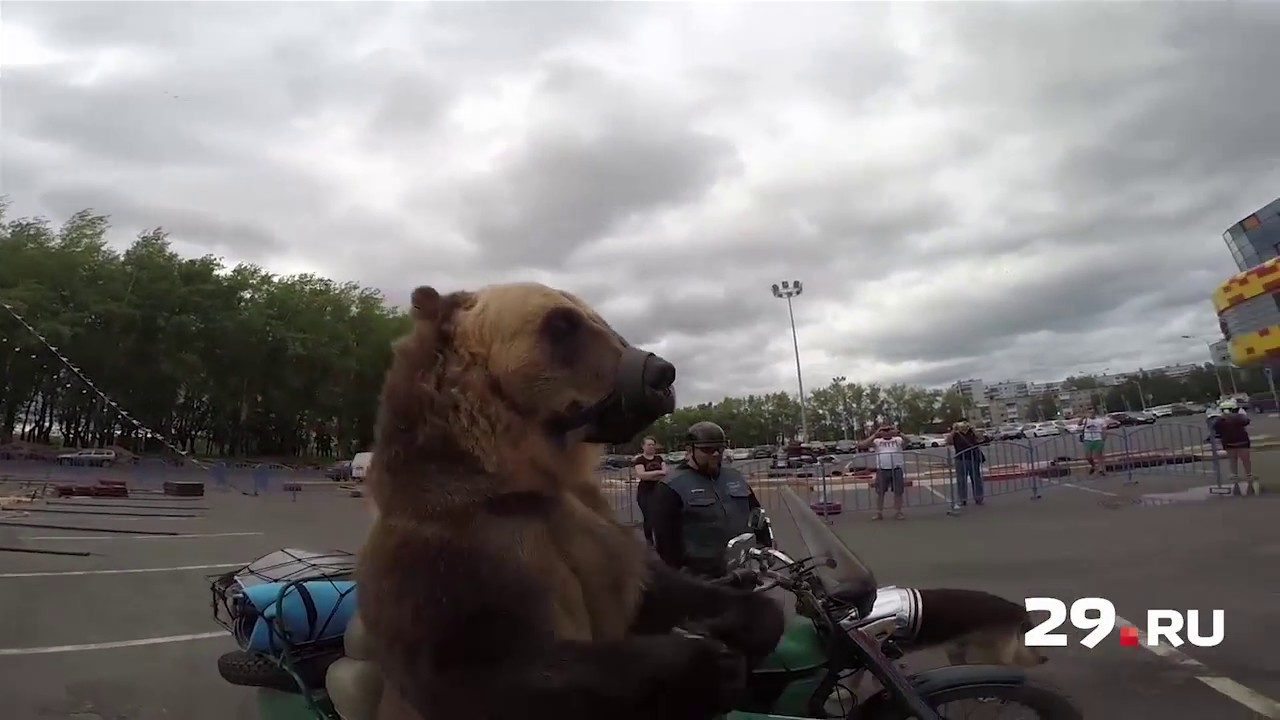 Image result for Snopes: This Video Of A Full Grown Beat Riding In A Motorcycle Sidecar Is Real