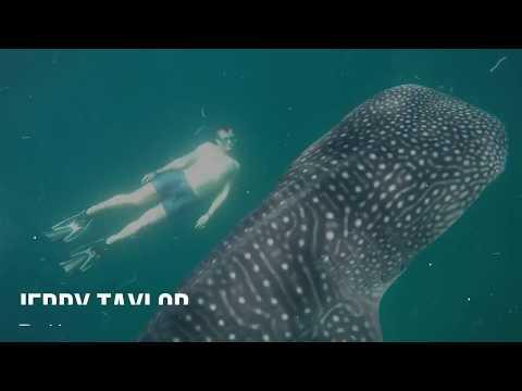 Whale Shark Adventure in Djibouti, Africa (Cheat Codes Ft. Fetty Wap - Feels Great)