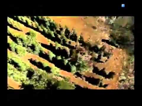 Noah's Ark Part 2 Cypress Wood II