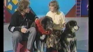Tibetan Mastiffs on BBC Blue Peter 1987-amazing archives footage