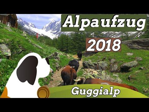 Alpaufzug Guggialp 2018|