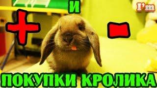 VLOG КРОЛИК ВСЯ ПРАВДА. Стоит ли покупать кролика? О чем нужно знать, покупая кролика!(Плюсы и минусы покупки кроликов. Как уговорить родителей купить домашнего питомца. Все об уходе за кроликом..., 2016-04-25T07:24:01.000Z)