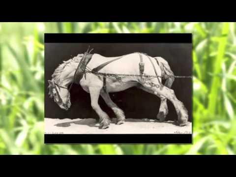 Grassfed Exchange 2014 - Peter Donovan